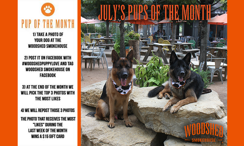 pup-of-the-month-july